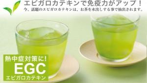 水出し煎茶エピガロカテキン